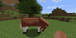 Taming a Horse