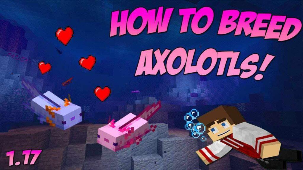 Breed Axolotls in Minecraft